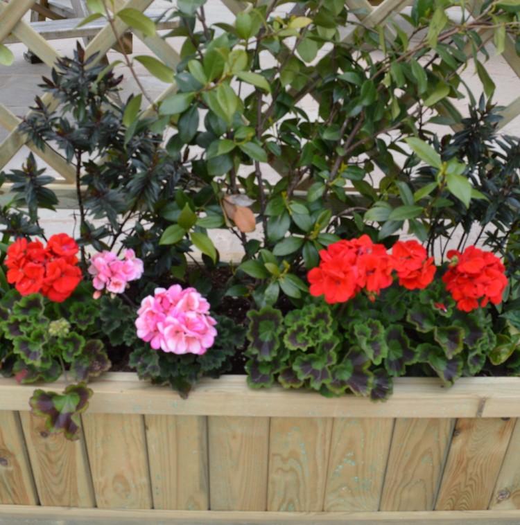 Cann Office Garden Planter